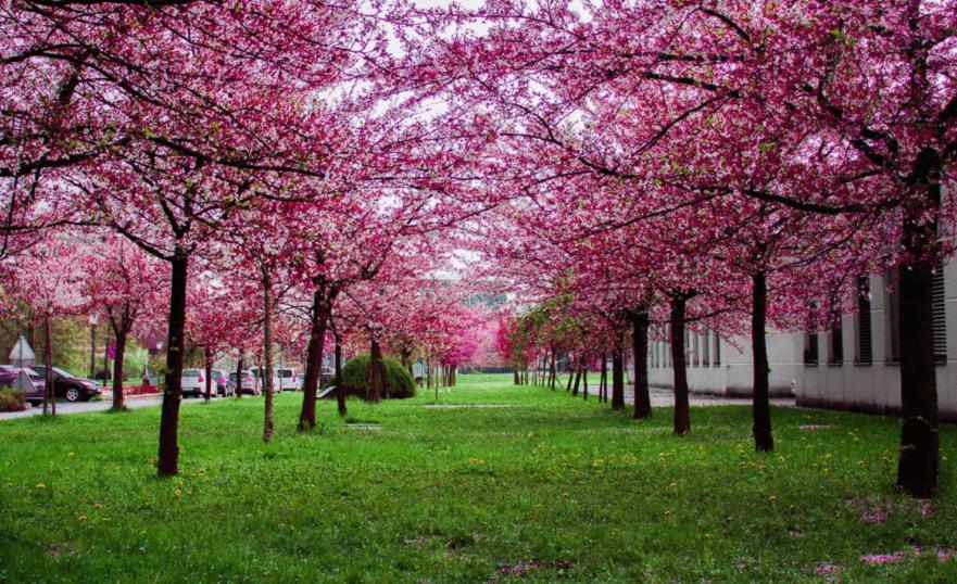 spring elder care facility visit tips